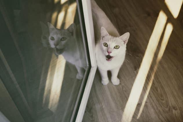 DGK 008: Jak pomagać kotom bezdomnym – Marta Walicka (Na ratunek bezdomniakom)