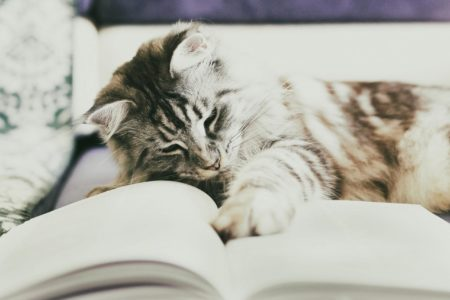 DGK 006: Czy hodowle kotów są potrzebne? – Dorota Szadurska (Zrozumieć kota)